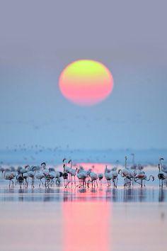 Morning Light   by Ashok Mansur