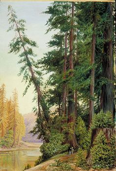 Redwood forest | ... North Gallery: Painting 204: View in a Redwood Forest, California