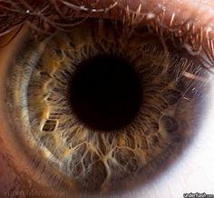 Blog de cursoiridologia : IRIDOLOGIA - CURSO DE IRIDOLOGIA A DISTÂNCIA, ESTUDO DA ÍRIS - 14