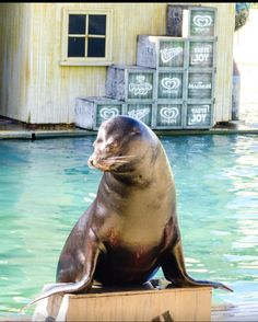 Sea lion at sea world