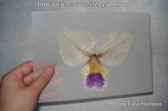 Lika Hanyuu - Oshibana - Flores Secas: [Oshibana] Primeira Orquídea