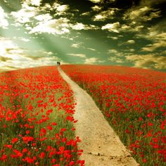 Pretty sure poppies are my favorite flower. Flanders Field, Jolie Photo, Red Poppies, Landscape Photos, Pathways, Beautiful World, Wild Flowers, Poppy Flowers, Nature Photography