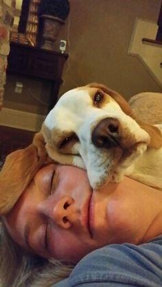 Awesome Beagle Companion