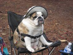 Brick S.Hithouse - my very first English Bulldog - LOVE HIM!
