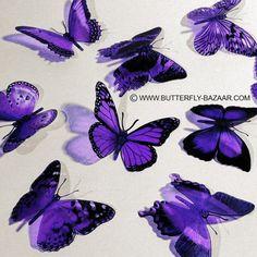 BUTTERFLIES PURPLE LAVENDER 15x by BUTTERFLYBAZAAR on Etsy, $15.00