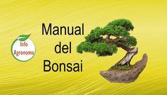 Manual completo de Bonsai PDF - InfoAgronomo Bonsai: miniature trees grown in trays, which reflect b Plantas Bonsai, Bonsai Tree Care, Mini Bonsai, Miniature Trees, Bonsai Garden, Growing Tree, Gerbera, Cactus Plants, Gardens