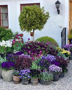Container gardening is a fun way to add to the visual attraction of your home. You can use the terrific suggestions given here to start improving your garden or begin a new one today. Your garden is certain to bring you great satisfac Back Gardens, Small Gardens, Outdoor Gardens, Backyard Garden Design, Backyard Landscaping, Garden Cottage, Garden Pots, Pea Gravel Garden, The Secret Garden