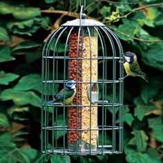 Two-in-one Bird Feeder | National Geographic Store