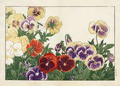 Tanigami Konan (1879 - 1928): Pansy, 1917