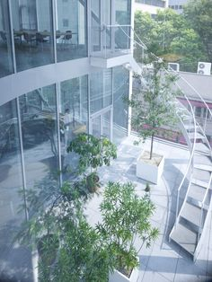 Shibaura-House-Kazuyo-Sejima- Associates-2Fterrace.jpg