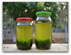 wildturmeric: Homemade Curry Leaves Hair Oil for Hair Growth and Premature Greying