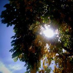 Verde, azul e amarelo #colorful #colors #natureart #nature #naturalfoods #pixrlexpress #pixrl #eucurtomotorola #motofoto #igersES #igers #ig_espiritosanto #notfilter #epic_capture #TagsForLikes #arbor #flowermagic #floweroftheday #flowers #flowerslovers #love #mybest_nature #gardener #sky #photooftheday