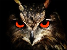 Owl digital painting - The Watcher by Tracey Lee Art Designs Owl Eyes, In The Tree, Art Blog, Black Backgrounds, Art Designs, Digital, Artwork, Painting, Animals