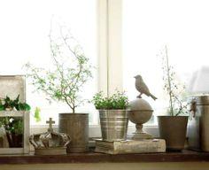 Fönsterbräda. Metall och gröna växter gifter sig fint. Blanda gärna in andra prydnadsföremål och glöm inte att olika höjder i fönstret skapar spänning.