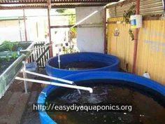 indoor hydroponic systems commercial aquaponics system design pdf trout aquapo - The world's most private search engine Best Fish For Aquaponics, Backyard Aquaponics, Aquaponics Plants, Hydroponics System, Aquaponics Supplies, Commercial Aquaponics, Fish For Sale, What Is Need, Plant Growth