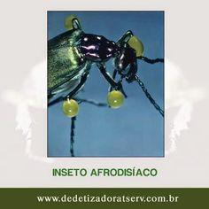 DEDETIZADORA TSERV FRANQUIA: CONHEÇA O INSETO AFRODISÍACO!!adora www.dedetizadoratserv.com.br