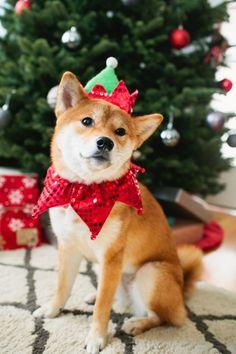 hellokitsu:  Is Christmas over yet so I can take this thing off? #onemoreday Just kidding, I love Christmas!