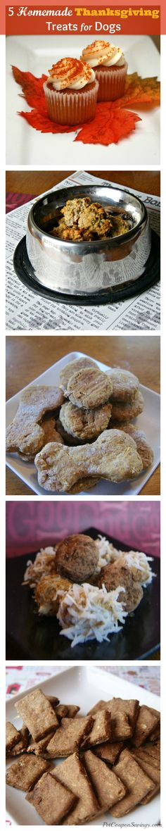 5 Homemade Thanksgiving Treats for Dogs - Pet Coupon Savings