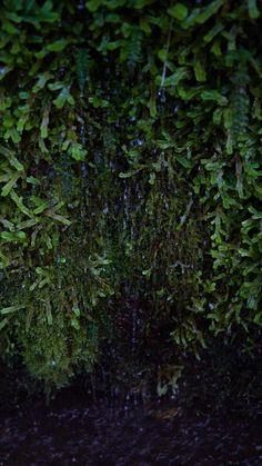 Aesthetic Photography Nature, Forest Photography, Nature Aesthetic, Aesthetic Videos, Beautiful Photos Of Nature, Amazing Nature, Beautiful Places, Nature Gif, Paludarium