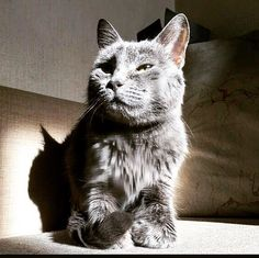 #cat #kitty #gatos