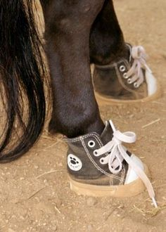 Therapy horse sneakers...?