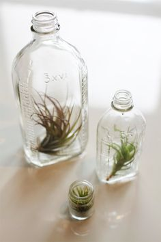Love the look of airplants in vintage lab glass bottles.