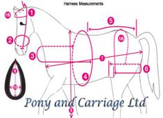 how to measure a horse for a driving harness - Google Search