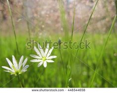 #background #beautiful #blossom #blue #blurry #bright #card #close #cloud #country #day #design #elements #farm #field #floral #flower #fresh #garden #grass #green #greeting #grow #herb #horizon #idyllic #land #landscape #lawn #meadow #natural #nature #nobody #outdoor #pasture #plain #plant #rural #scene #scenic #season #sky #spring #summer #sun #sunlight #sunny #sunshine #tenderness #up #view #white #yellow