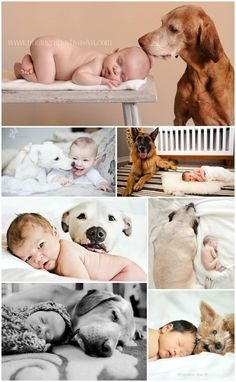 Babies and Pets can send a very merry message!