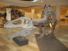 Hungarian Natural History Museum (Budapest, Hungary): Address, Phone Number, Attraction Reviews - TripAdvisor
