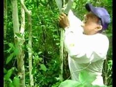 MATEIRO ELIAS MOSTRA ALGUMAS PLANTAS DA MATA ATLÂNTICA PARTE 2 - YouTube