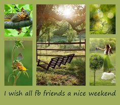Forest Flowers, Weekend Fun, Collagen, Nice, Collages, Nice France