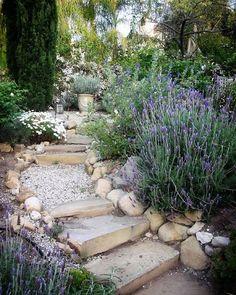 GARDEN: Hill Country - Provence garden stairs / Climate is so very similar. Drought Resistant Landscaping, Plants, Mediterranean Garden Design, Garden Paths, Outdoor Gardens, Dream Garden, Landscape, Garden Steps, Garden Stairs