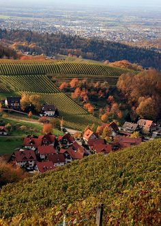 Baden vineyards in fall - photo by: Rob & Lisa Meehan, Source: Flickr, found with Wylio.com