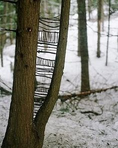 sweater tree. from 'living with limits: a collection with nature' by David Govedore and Rachel Dolezal