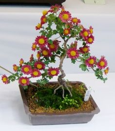 proflowers com bonsai