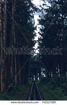 https://www.shutterstock.com/image-photo/view-pine-forest-gloomy-afternoon-742117189?src=sQkdHFdScyVrNoJqwVT8kg-1-1