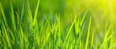 garden care schedule garden care schedule Lawn Care Calendar for Warm-Season Lawns Lawn And Garden, Indoor Garden, Tree Garden, Lawn Care Schedule, Lawn Care Companies, Care Calendar, Lawn Maintenance, Lawn Edging, Grass Seed