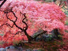 The Best Gardens In The World:Butchart Gardens