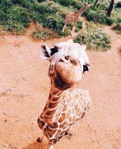 𝘱𝘪𝘯 ♡ 𝘔𝘪𝘢𝘒𝘢𝘺24 Giraffe, Felt Giraffe, Giraffes