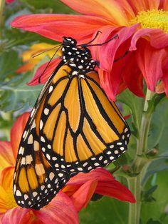 S-M Flower Heart Monarch Butterfly Colorful Denim Vest