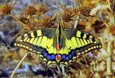 Usuario: candi (España) - mariposa - Tomada en argamasilla de Alba el 08/10/2014