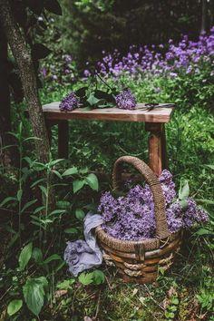 Design Jardin, Garden Design, Lilac Flowers, Beautiful Flowers, Purple Roses, Lilac Bushes, Purple Garden, Shades Of Purple, Dream Garden