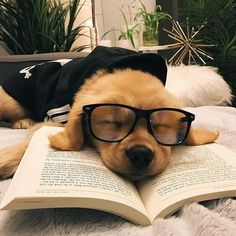 Things that make you go AWW! Like puppies, bunnies, babies, and so on. A place for really cute pictures and videos! Cute Little Animals, Cute Funny Animals, Funny Dogs, Baby Animals Pictures, Cute Animal Photos, Cute Dogs And Puppies, Baby Dogs, Doggies, Tiny Puppies
