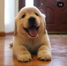 All About The Trustworthy Golden Retriever Puppy Exercise Needs Super Cute Puppies, Cute Baby Dogs, Cute Little Puppies, Cute Dogs And Puppies, Cute Baby Animals, I Love Dogs, Pet Dogs, Doggies, Pets