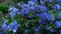 Forum Ogrodnicze Oaza :: Topic: Wisley - ogród Królewskiego Towarzystwa Ogrodniczego (1/2)