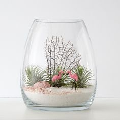 Two flamingos look fabulous in the foreground of this fantastic little land. Stock is limited so pre-order now for Christmas delivery to NSW, ACT, VIC, QLD & SA. Deliveries will be made between 21-24 December, and the airplants are fine in a box for a week or so. This terrarium is in a belly vase…