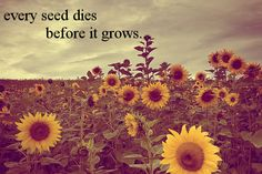 Every seed dies before it grows <3 - Switchfoot