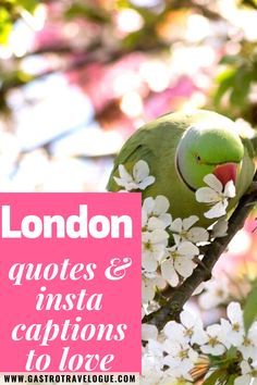 London quotes for wanderlust. Check out some of the best London quotes around. London quotes travel    Top London quotes   Quotes about London   Paddington Bear quotes   Harry Potter quotes   Quotes from London  Insta captions London   London insta captions   Funny London quotes   London quotes Instagram   London quotes poem   quotes about the London Eye  Travel quotes  London weather quotes European Travel Tips, Europe Travel Guide, Travel Destinations, London Travel, Travel Uk, Travel England, Travel Info, Travel Goals, Travel Guides
