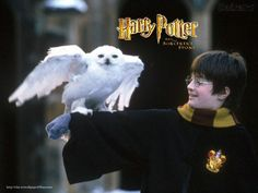 Harry Potter | Harry Potter Papel de Parede no Baixaki